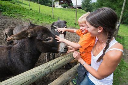 Wildpark Tierpark Assling   © TVB Osttirol / Fun Alpin Osttirol Sommerrodelbahn GmbH